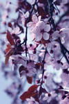 Flowers 2 by ByNinaaa