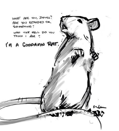 a rat by MK01