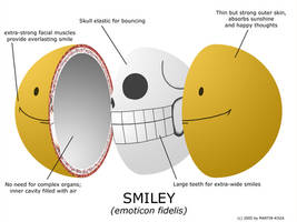 Anatomy of a Smiley