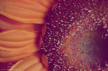 Flower by michellangel
