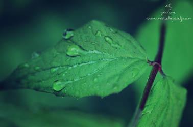 Waterdrop by michellangel