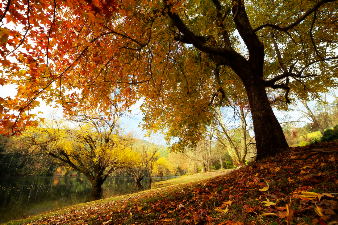 Autumn Animus by Aquilapse