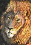 Lion by MNIMOREA