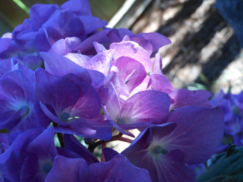 A Vision In Lilac by PrinceSsCarmilla