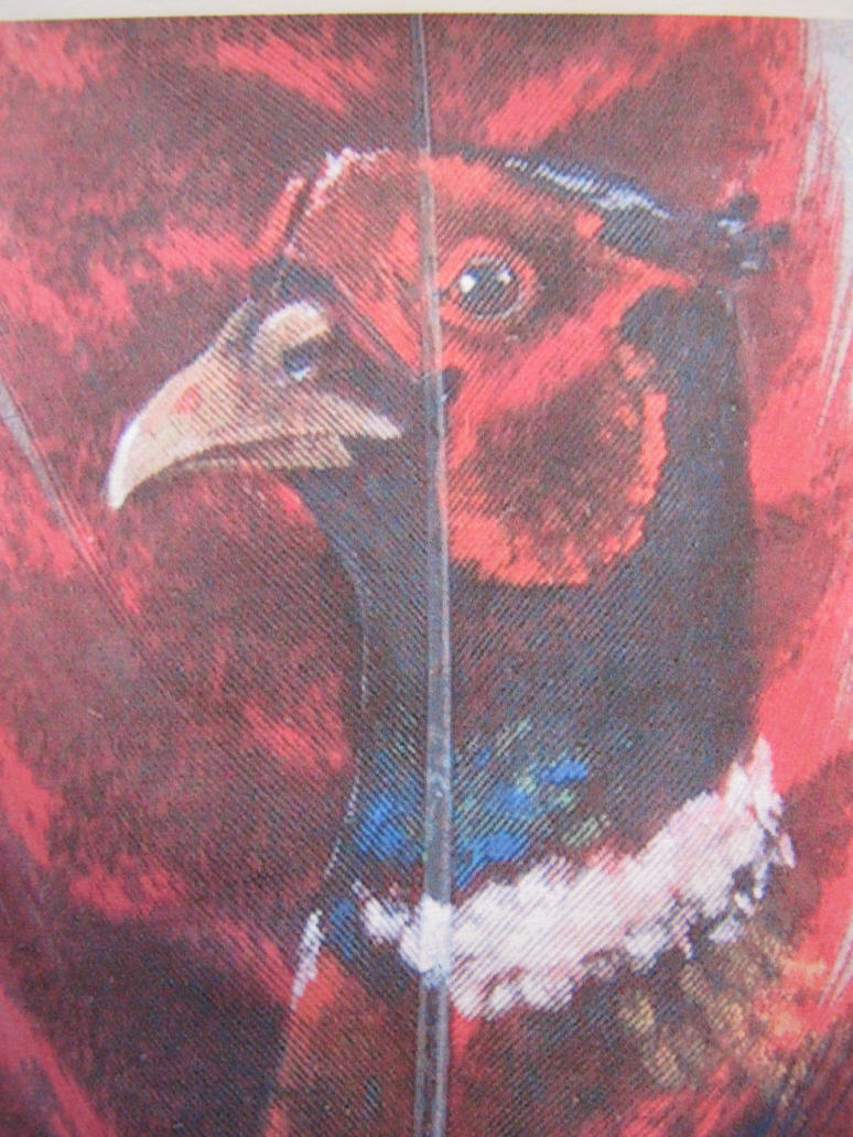 turkey feather art by Wildlifefeathers