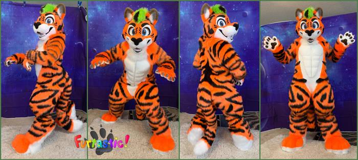Velos the Tiger