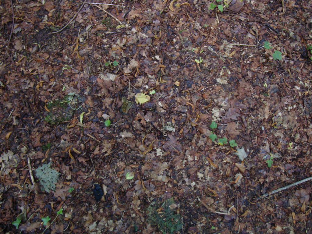 Forest Floor by piewedge-stock on DeviantArt Dark Forest Floor Texture