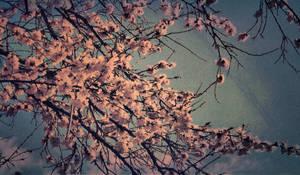 Spring. by ShadowsInMyEyes