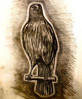 Crow Study Graphite 1H