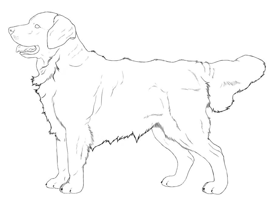 Line Drawing Golden Retriever : Golden retriever by amarosoranch on deviantart