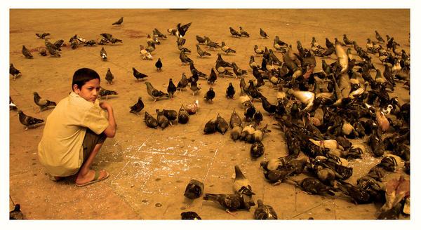 boy and birds by poKotazo
