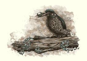 Kingfisher by Johannahoj