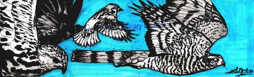 WD 5- IT'S GOT BIRDS by Hawkpath-tail