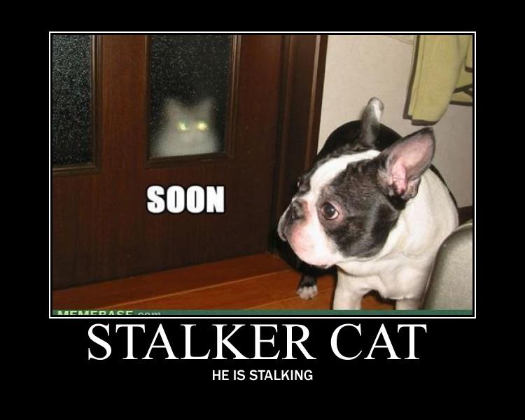 Stalker Cat by 6SeaCat9