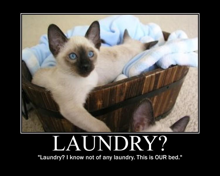 Laundry by 6SeaCat9
