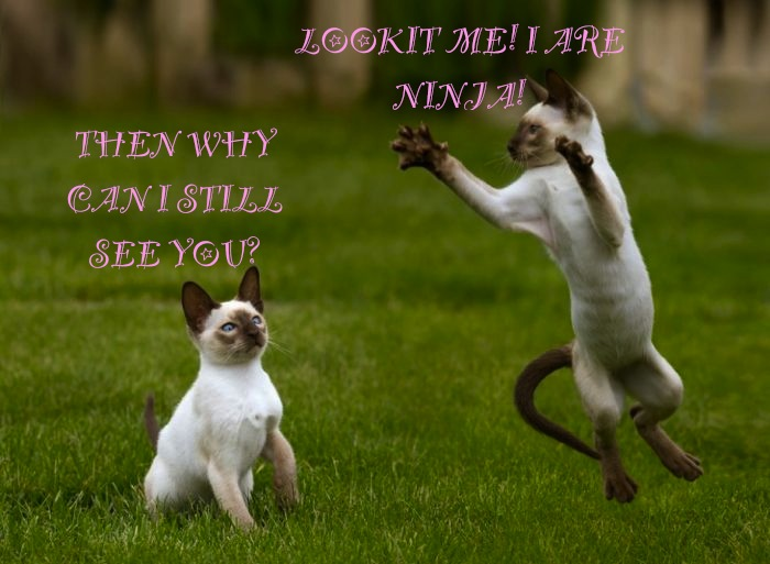LOL Cat: Ninja by 6SeaCat9