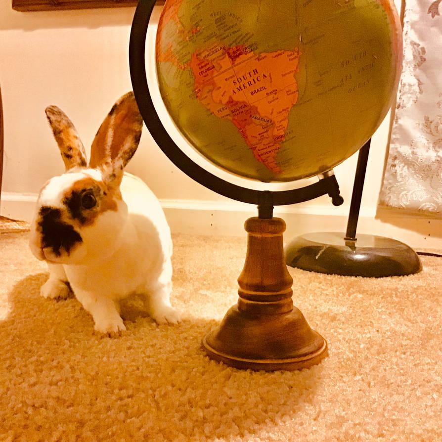 My bunny traveled!