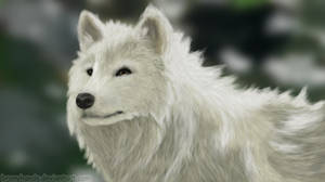 White Wolf (Thanks for the 1000 Watchers) by BronyHands