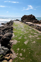 Jetty covered by green algae