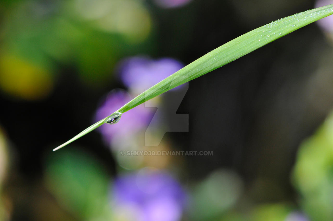 Little Water Drop on a Grass Stem by shkyo30