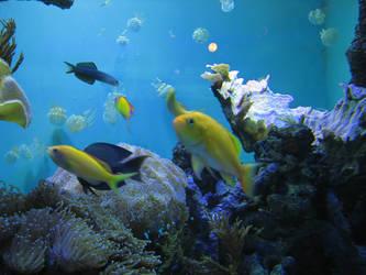 Aquarium Fish 06