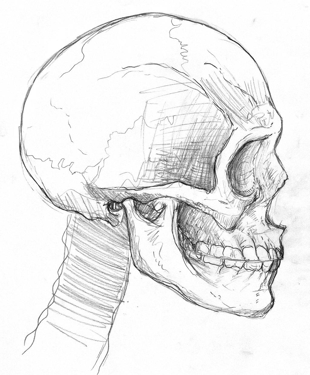 My Skull: Side by SteveGibson on DeviantArt