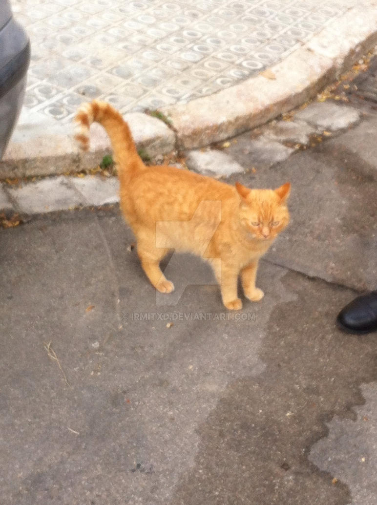 An alley cat :) by IrmitXD