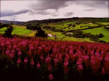 Wildflowers by Ariane-C