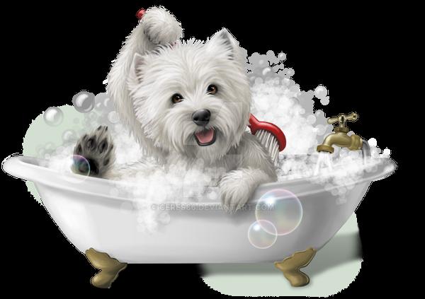 Dog Grooming Highland Il