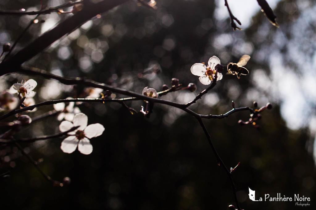 Let it bee... by trinan
