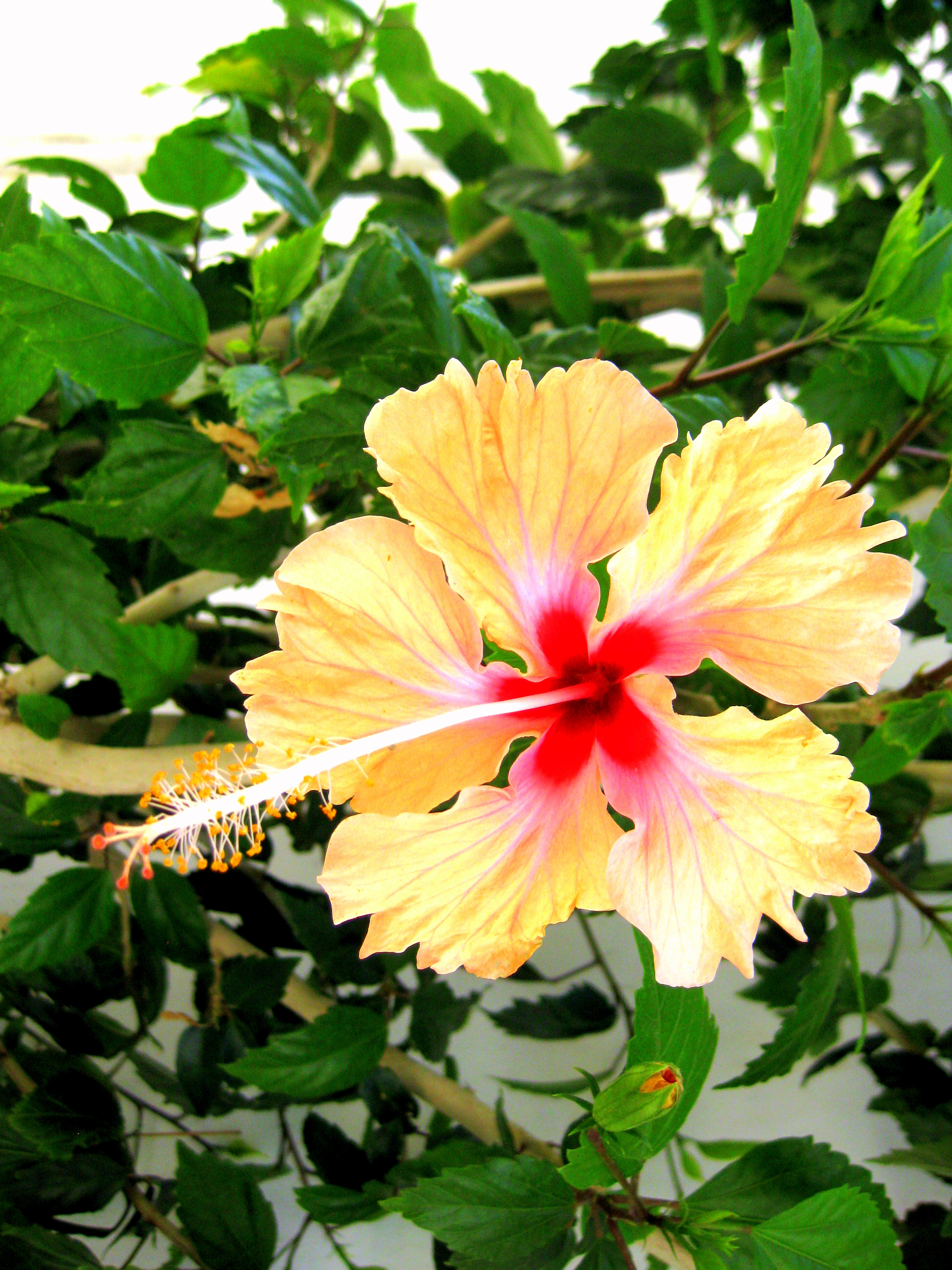 Tropical Flowers, Hawaiian flowers, gifts and floral arrangements from the