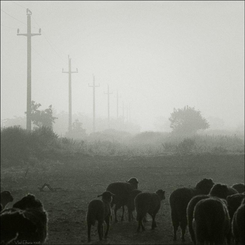 morning mist by veftenie