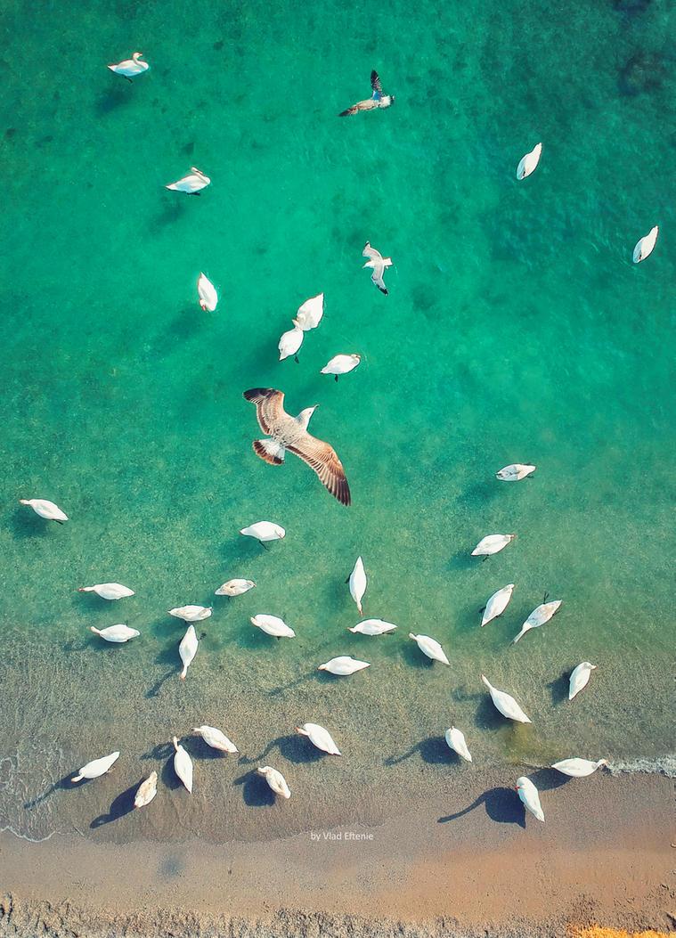 Swan sea by veftenie