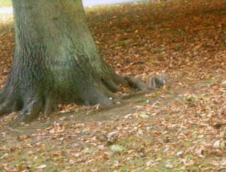 Squirrel hiding by Keresaspa