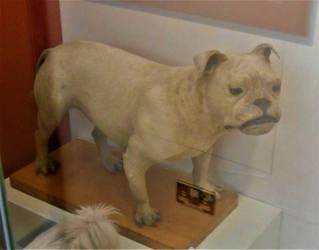 Bulldog by Keresaspa