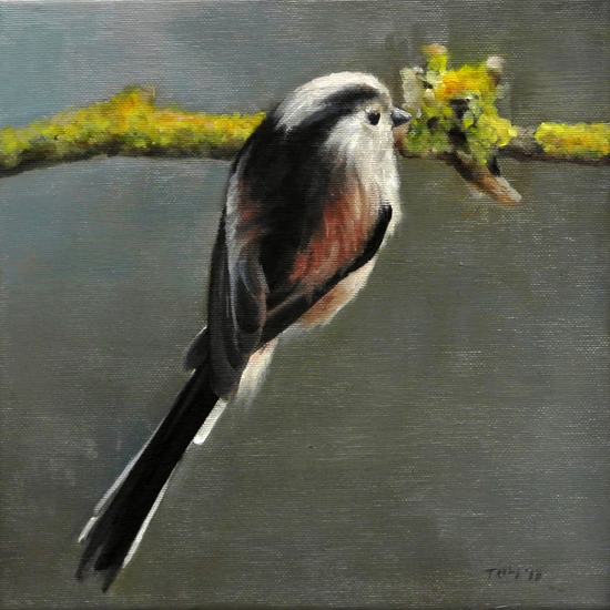 Bird on branch by trulsespedal
