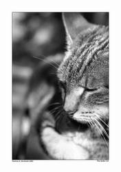 The Quiet Cat by Flash-MC