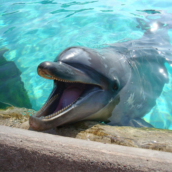 Dolphin laughing gif