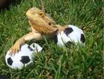 Saphira the soccer lizard