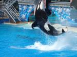 Jumping Orca 2