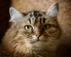 Cat.. by StacyD