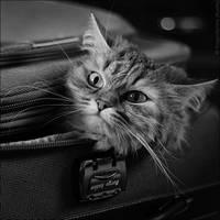 Fluffy Luggage by StacyD