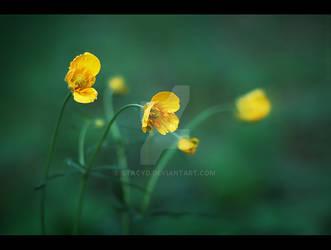 [Yellow]