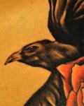 Raven-detail