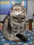 My big cat Kyoko by lamu1976