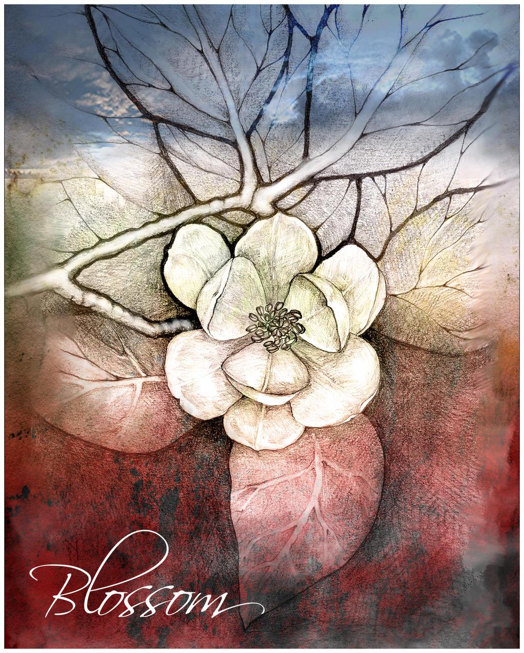 blossom by lovelycristina