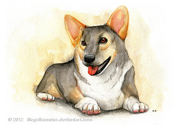 Corgi commission by IllegalHamster