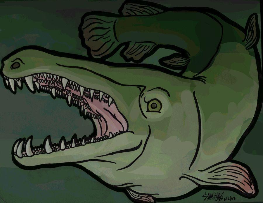 Alligator gar by thechemist57 on deviantart for Alligator gar coloring page