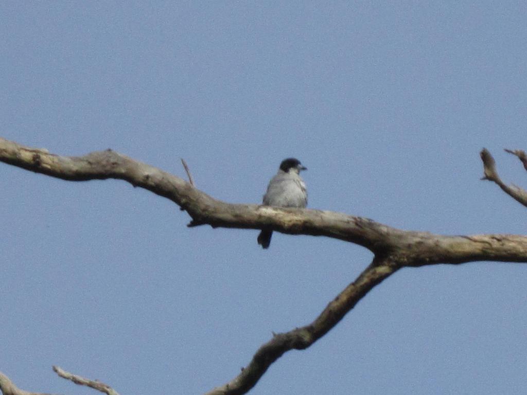 mystery birdie! by apple-symphony