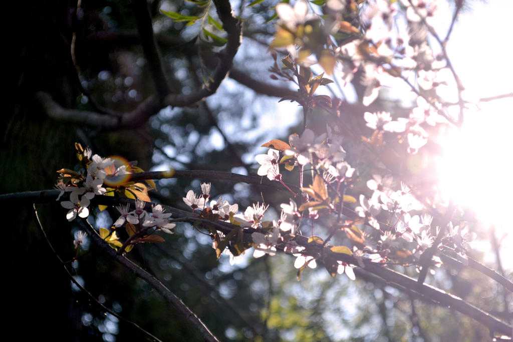 Blossom flare by apple-symphony